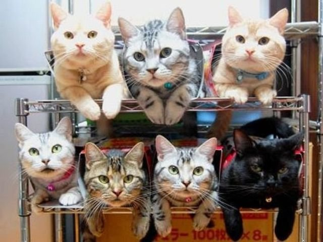 how to know 640 03 - how to organize your cats