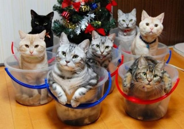how to know 640 04 - how to organize your cats