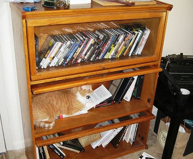 how to know 640 05 - how to organize your cats