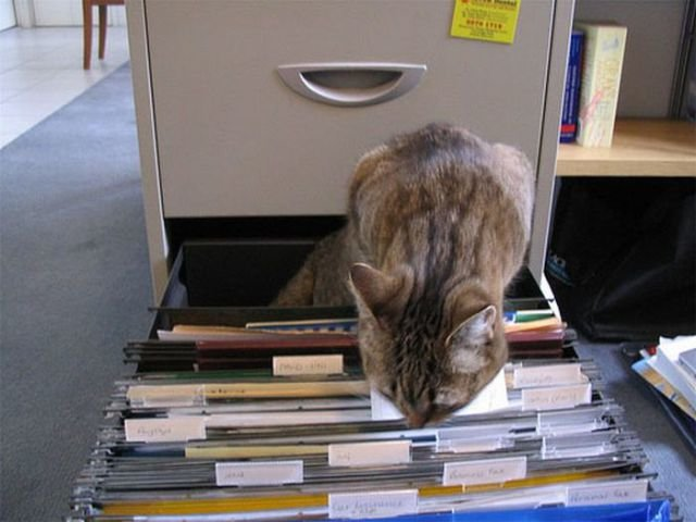 how to know 640 06 - how to organize your cats