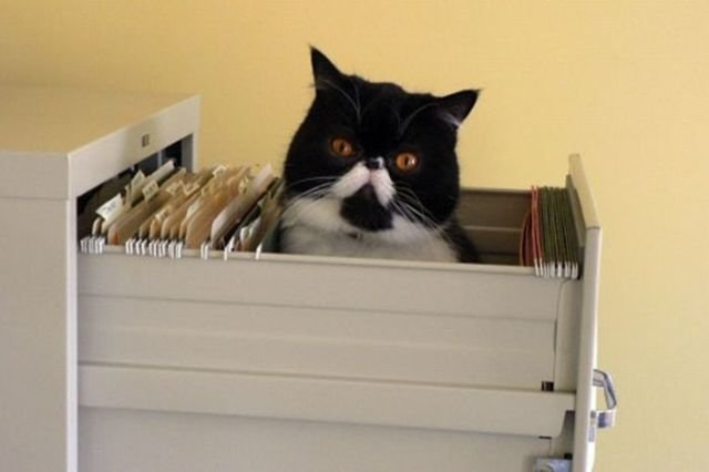 how to know 640 07 - how to organize your cats