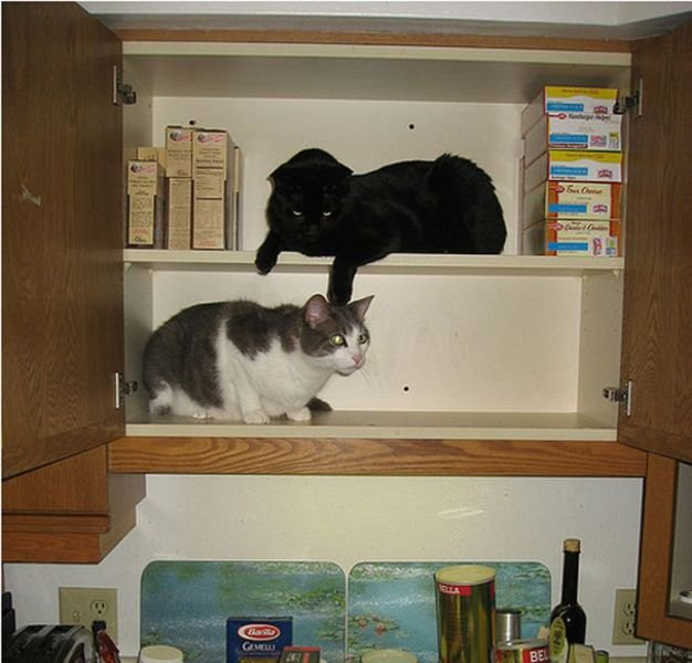 how to know 640 10 - how to organize your cats