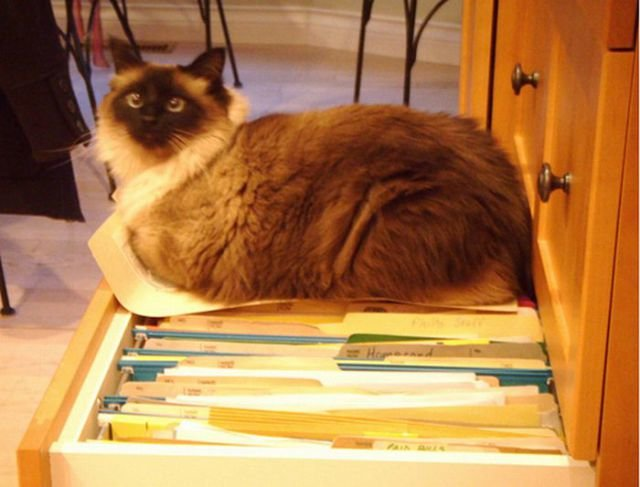 how to know 640 11 - how to organize your cats