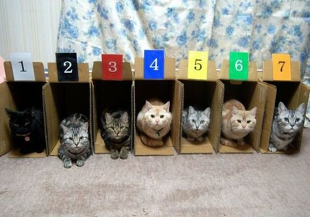 how to know 640 12 - how to organize your cats