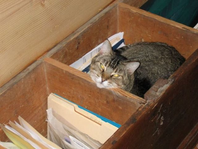 how to know 640 14 - how to organize your cats