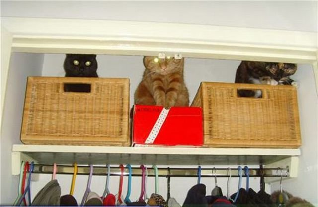 how to know 640 15 - how to organize your cats