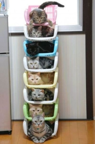 how to know 640 16 - how to organize your cats