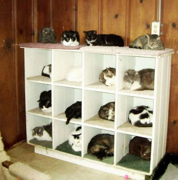 how to know 640 17 - how to organize your cats