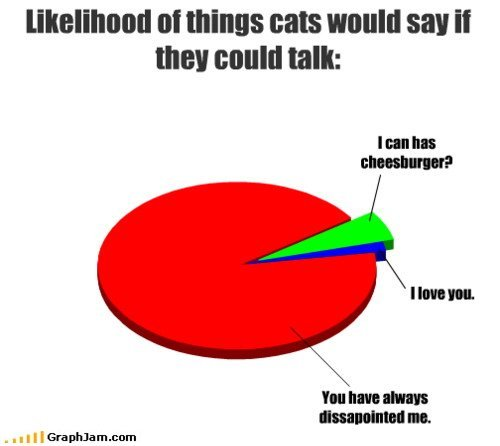ifcatscouldtalk -  if cats could talk...
