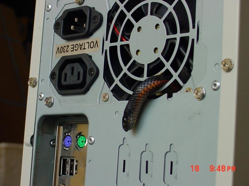 image001 - snake in your pc fan!