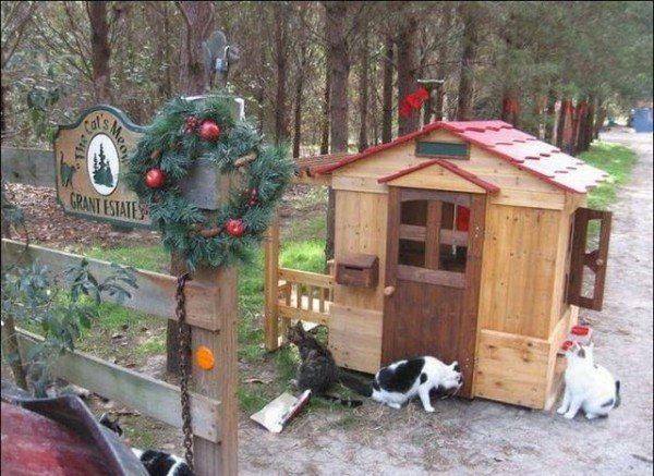 image0078 600x437 - man built a sanctuary for homeless cats