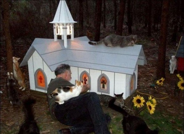 image0089 600x437 - man built a sanctuary for homeless cats