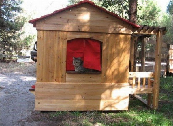 image009101 600x437 - man built a sanctuary for homeless cats