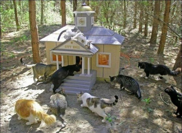 image01112 600x437 - man built a sanctuary for homeless cats