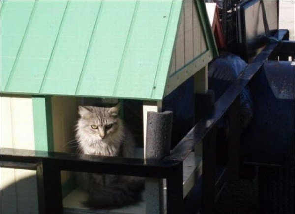 image01314 600x437 - man built a sanctuary for homeless cats
