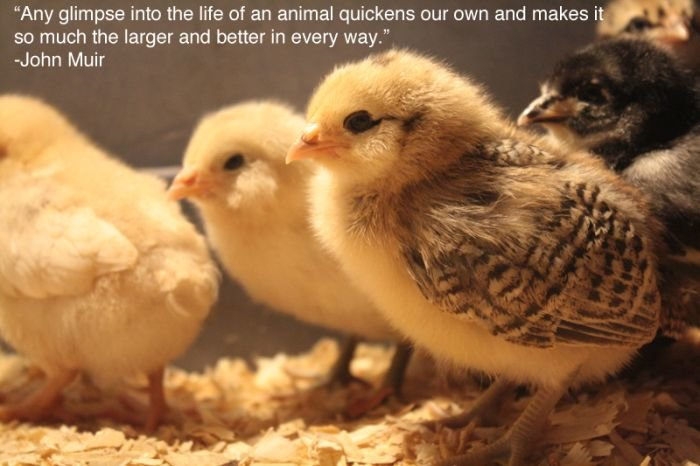 inspiring pictures for people who love animals