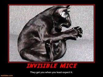 invisible mice invisible mice cat wytch demotivational posters