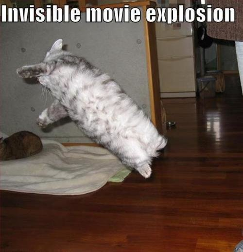 invisibleexplosion - cats invisible things: part 2
