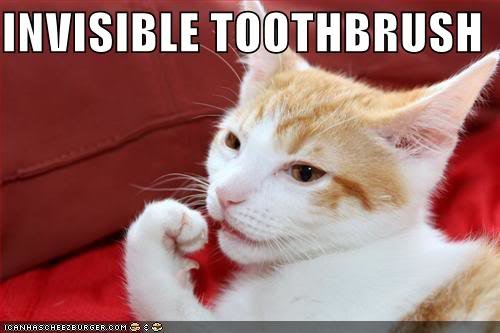 invisibletoothb128585314481152643 - cats invisible things: part 2
