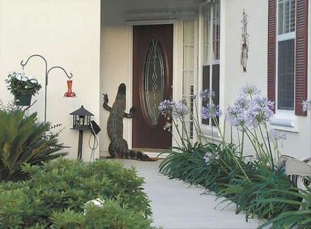 jehovah alligators are becoming bigger problem would like admit