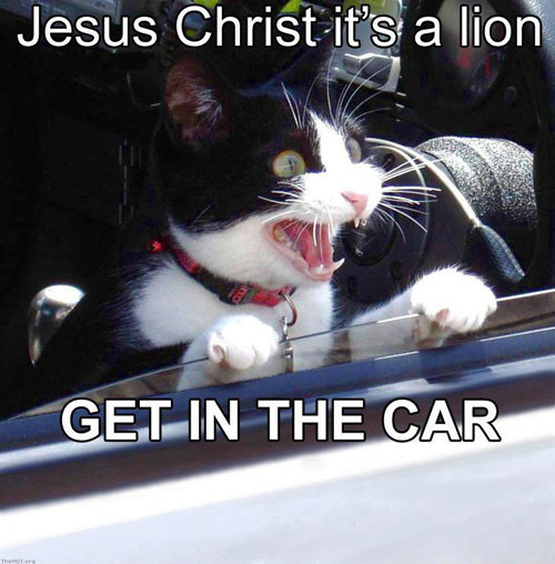 jesus christ lion