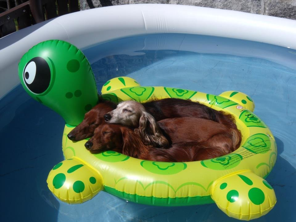 three weiners floaty hot summer day