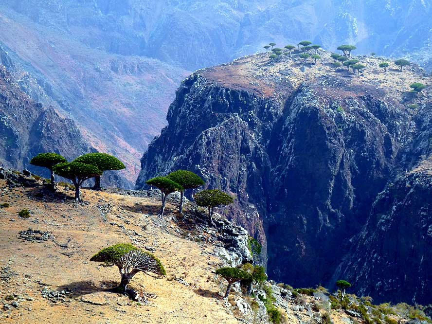 kbpsmmx - socotra island, yemen. one of the most alien looking places on earth.