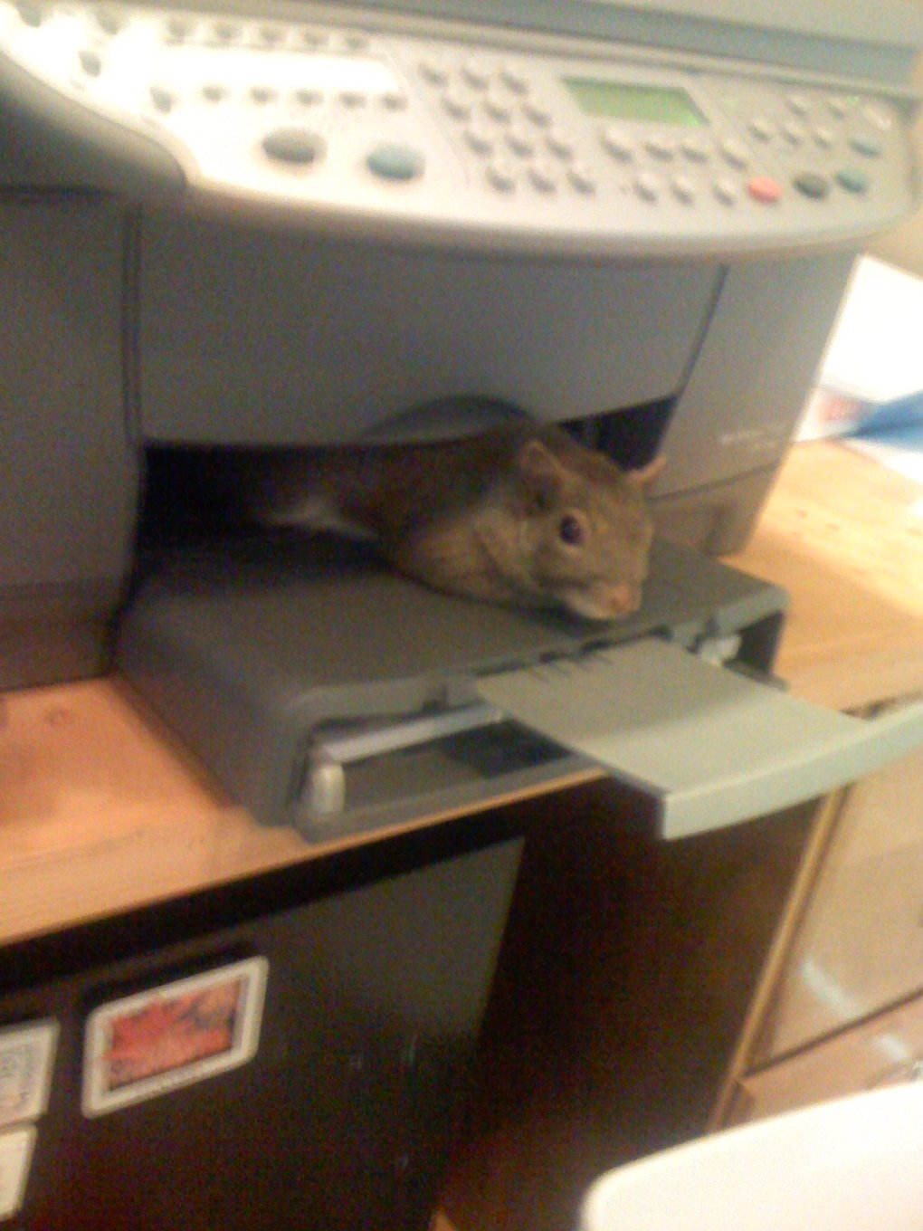 kdgjv - did anyone print a squirrel? [pic]