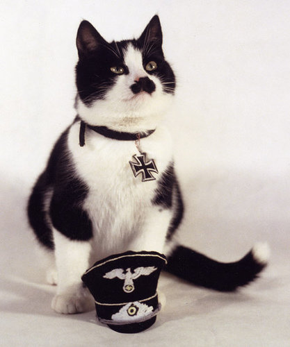 kitler - cats that look like hitler