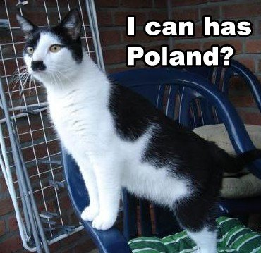 kitler3 - cats that look like hitler