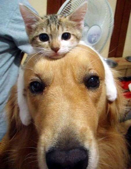 kitty headband