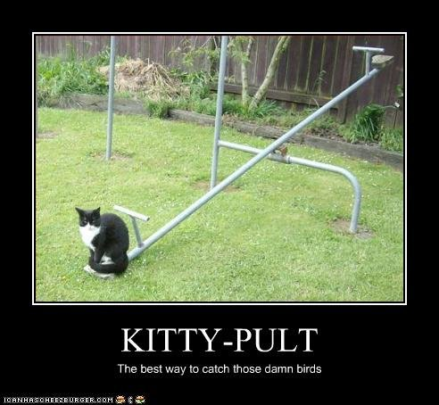 kitty pult