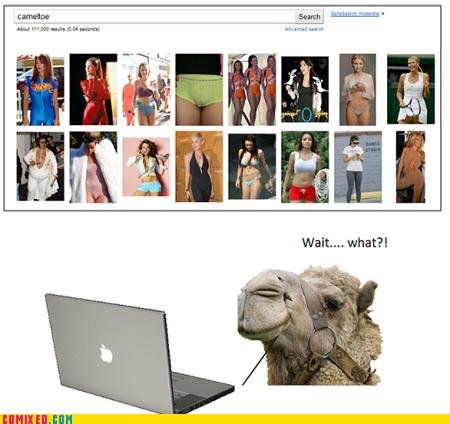 koma comic strip hey camels cant use internets