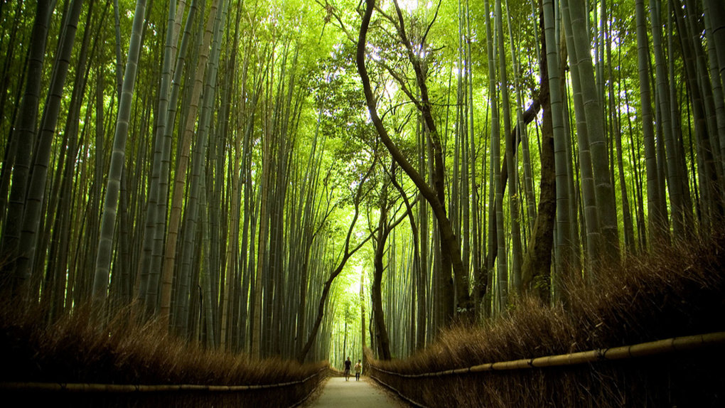 kyoto japan forest