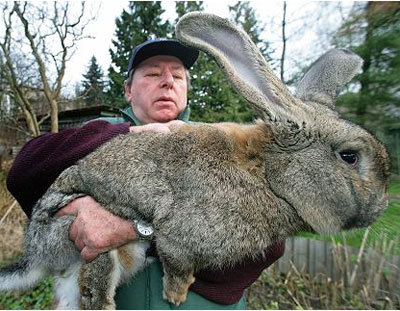 lepus - these are not photoshoped