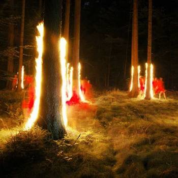 light photography forest fire