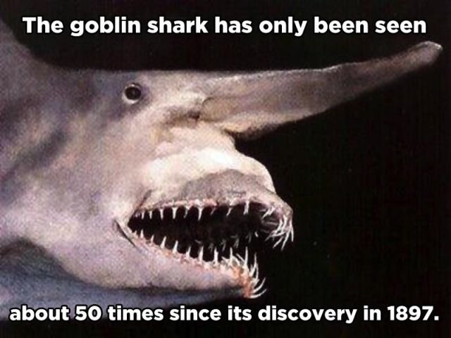 little known incredible animal facts