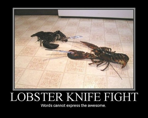 lobster knife fight huge funny pic collection