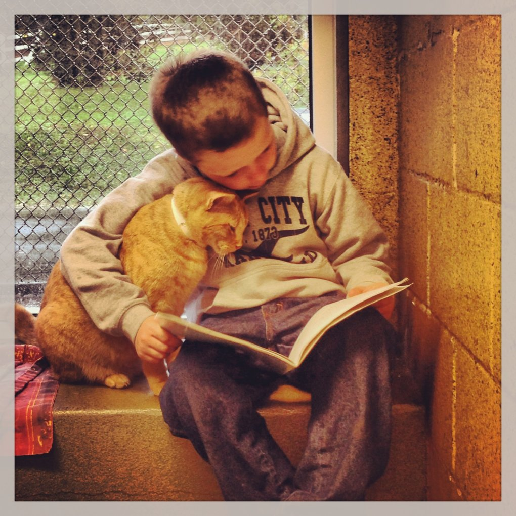 local rescue program called book buddies where kids read sheltered cats