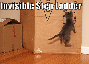 lolcat invisible step ladde