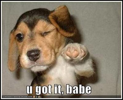 loldog funny pictures got babe