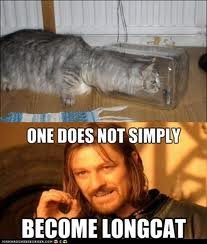 longcat - one does not simply....