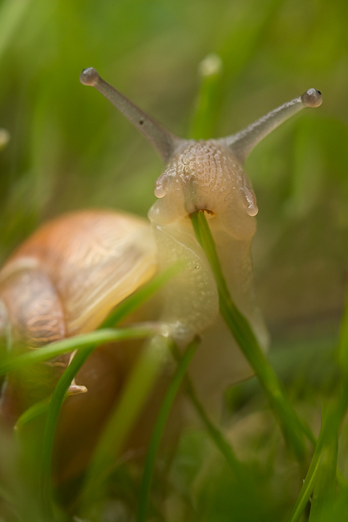 look snail eating grass appreciate now move