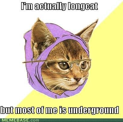 memes actually longcat but most underground
