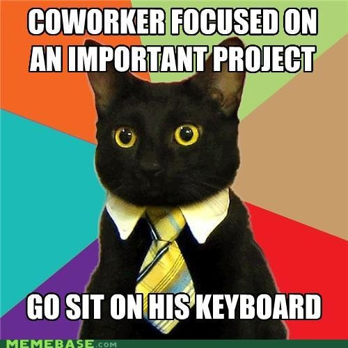 memes business cat attention whore