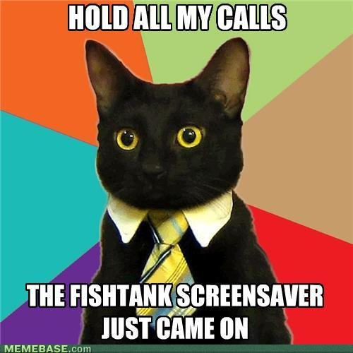 memes business cat hold calls