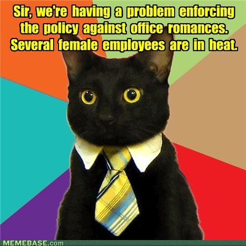 memes business cat lets hope for menopaws