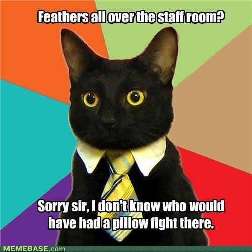 memes business cat suddenly feathers