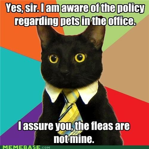 memes business cat yes sir