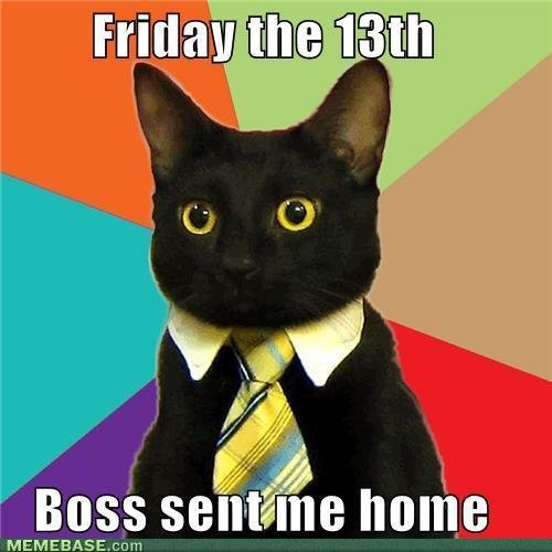 memes business cat lucked out